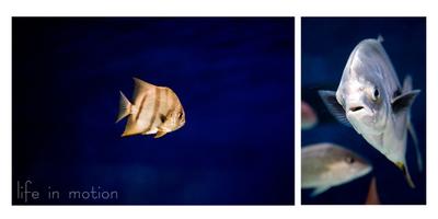 Fish_sbweb
