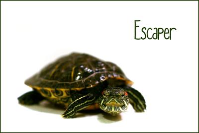 Escaper_web